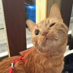 Call for Submissions: Cat on a Leash Review
